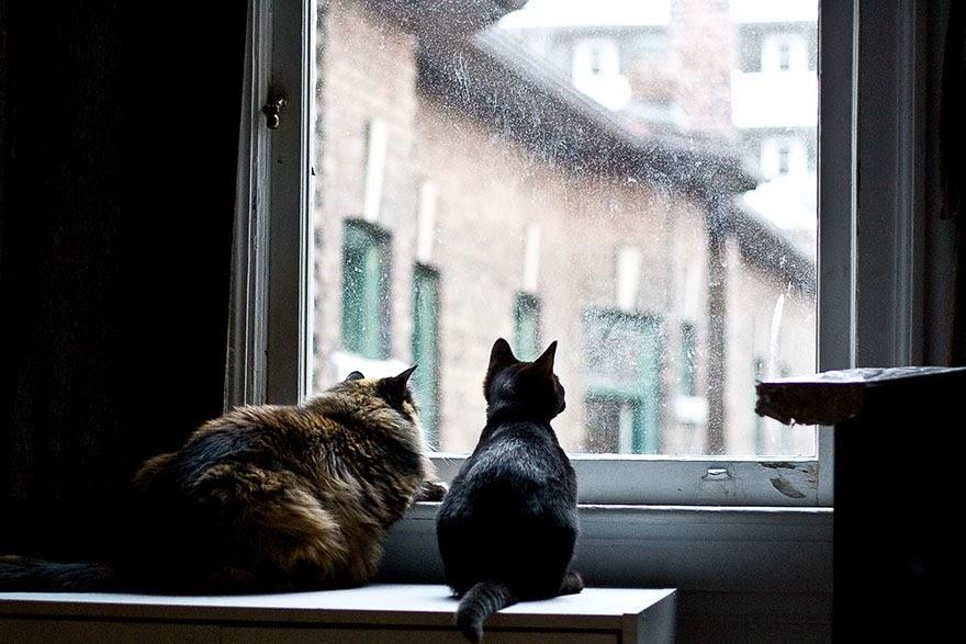 cat-waiting-window-30.jpg