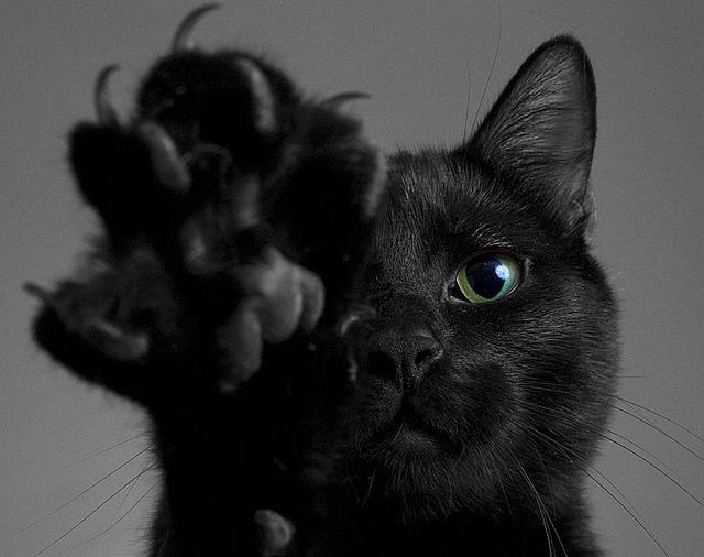 black-cat-black-cats-cat-cat-claws-cat-paw-favim.jpg