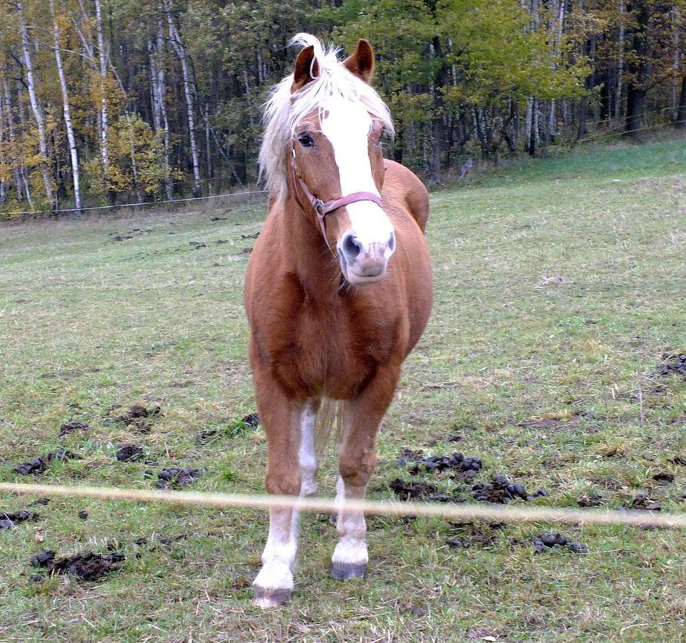 pferd01.jpg