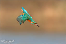 imagesvogel.jpg