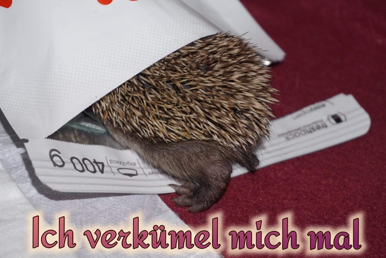 verkr__meln_2.jpg