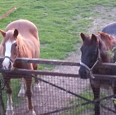 pferde_von_oben.jpg
