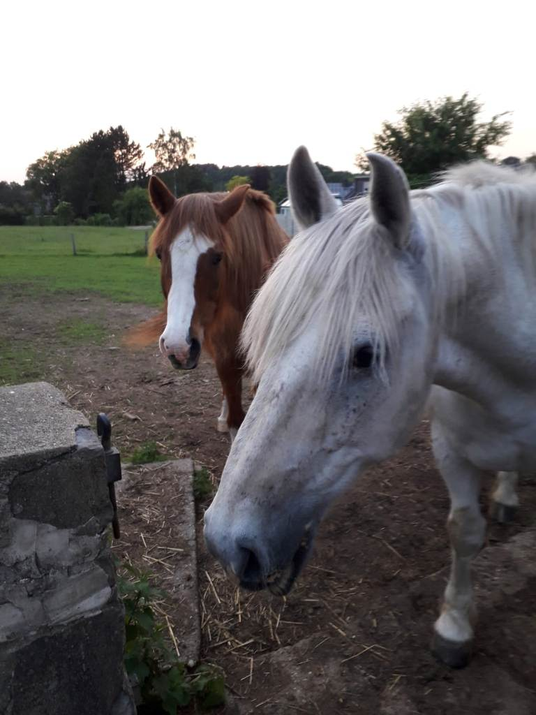 pferdekopfe.jpg