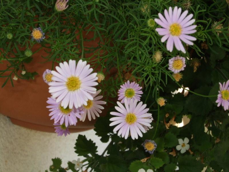 bild_348_balkon_08.jpg