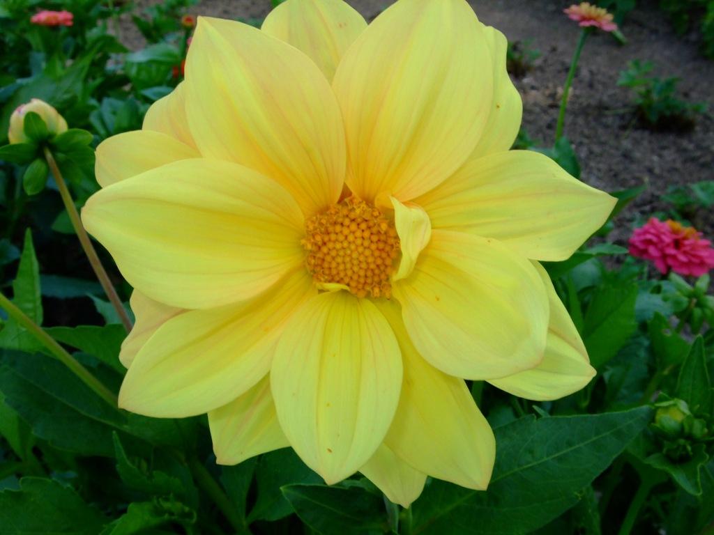 2008_02030056garten_08.jpg