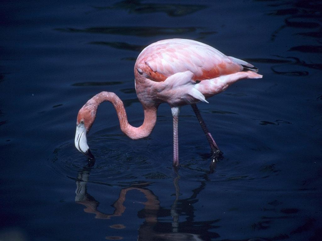 flamingos-012.jpg