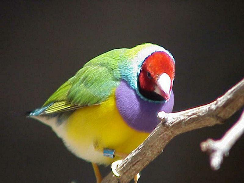 bird-11013.jpg
