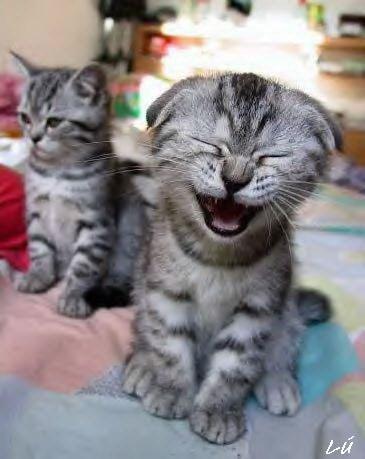 laughing_cat_jpg.jpg