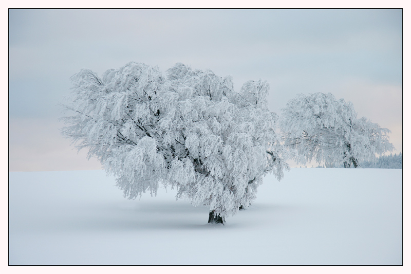 winter_01.jpg