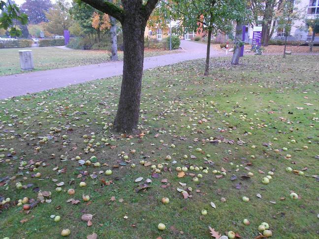 fallobst1.jpg